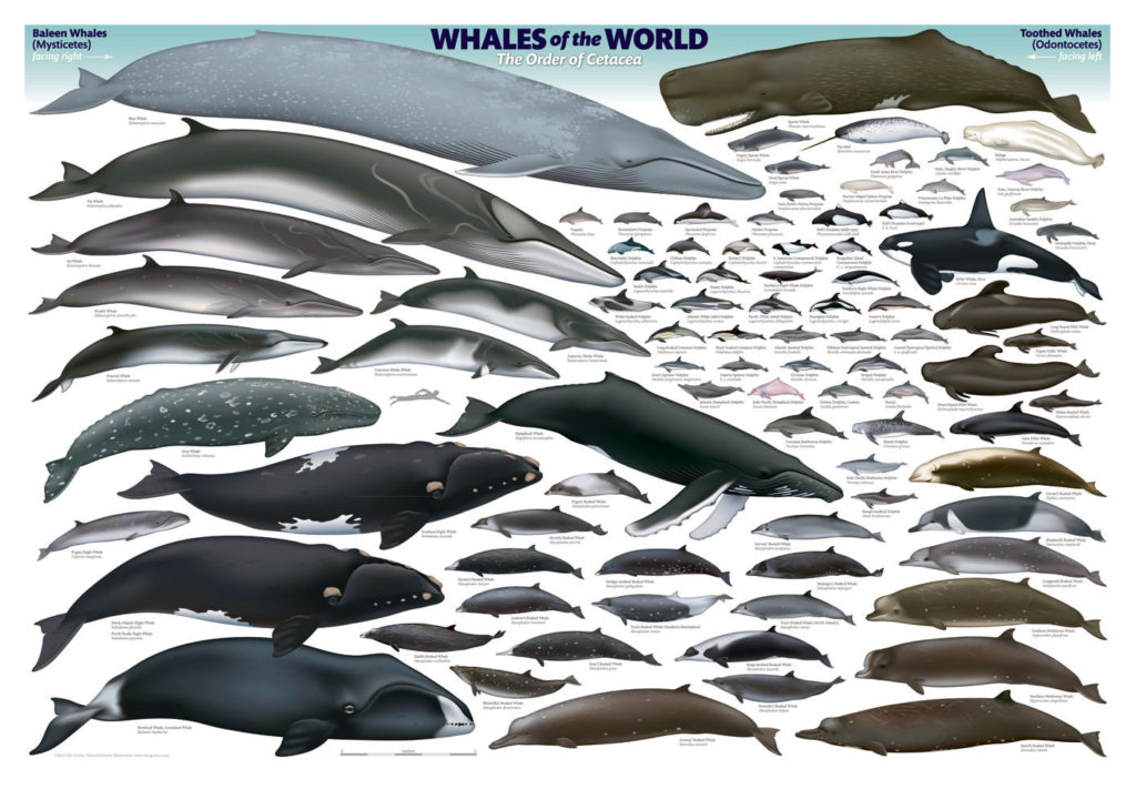ukogorterposterwhales-world