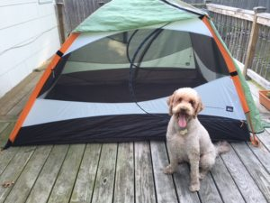 My tent, with my fabulous dog model, Maia.