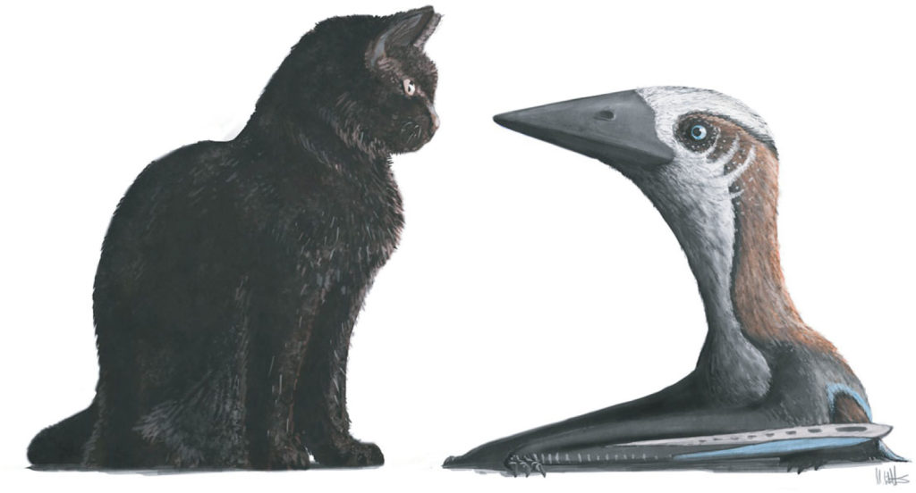 pterosaur cat Fig 6