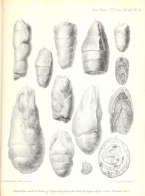 coprolites1-by-buckland-1835